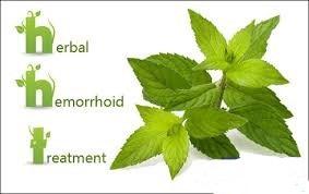 درمان گیاهی هموروئید یا بواسیر